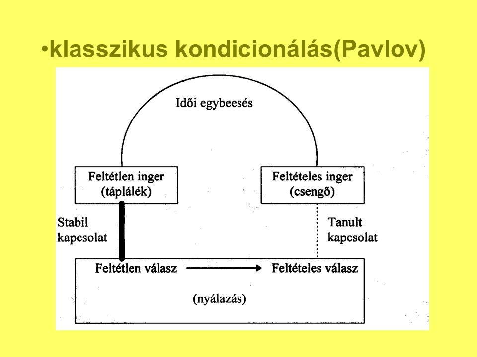 klasszikus kondicionálás(Pavlov)