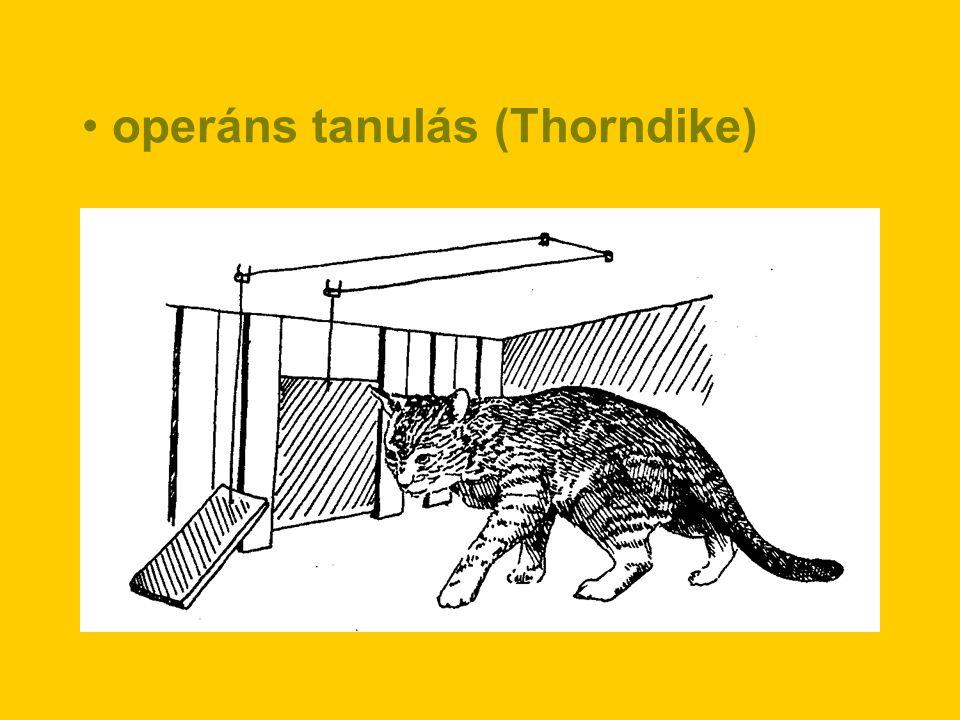 operáns tanulás (Thorndike)