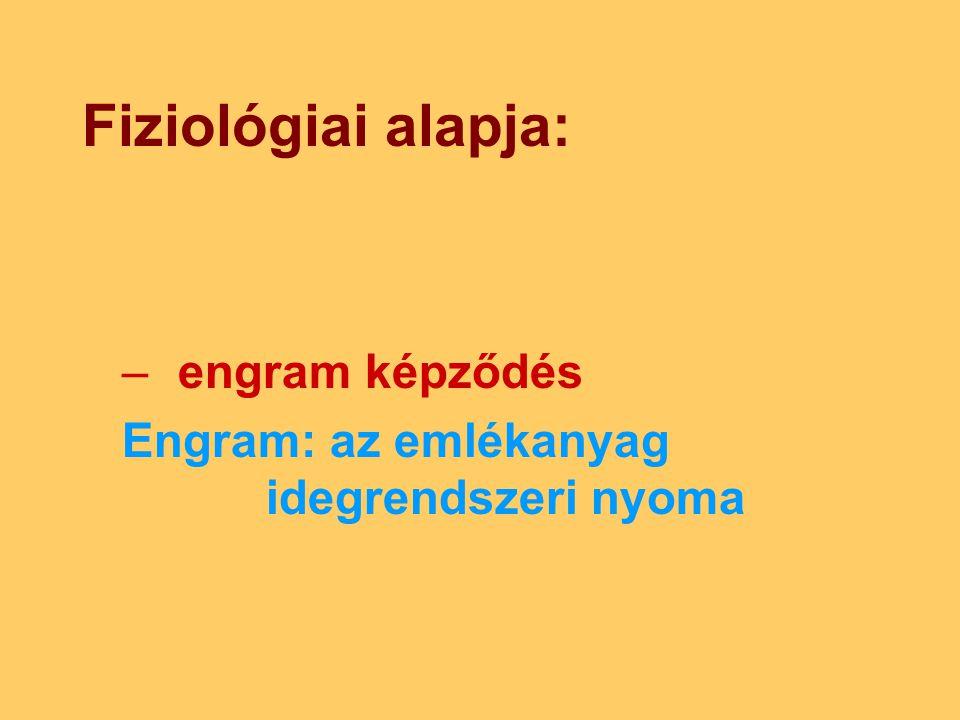 Fiziológiai alapja: –engram képződés Engram: az emlékanyag idegrendszeri nyoma