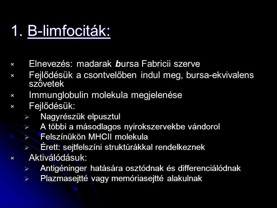 1. B-limfociták: × × Elnevezés: madarak bursa Fabricii szerve × × Fejlődésük a csontvelőben indul meg, bursa-ekvivalens szövetek × × Immunglobulin mol