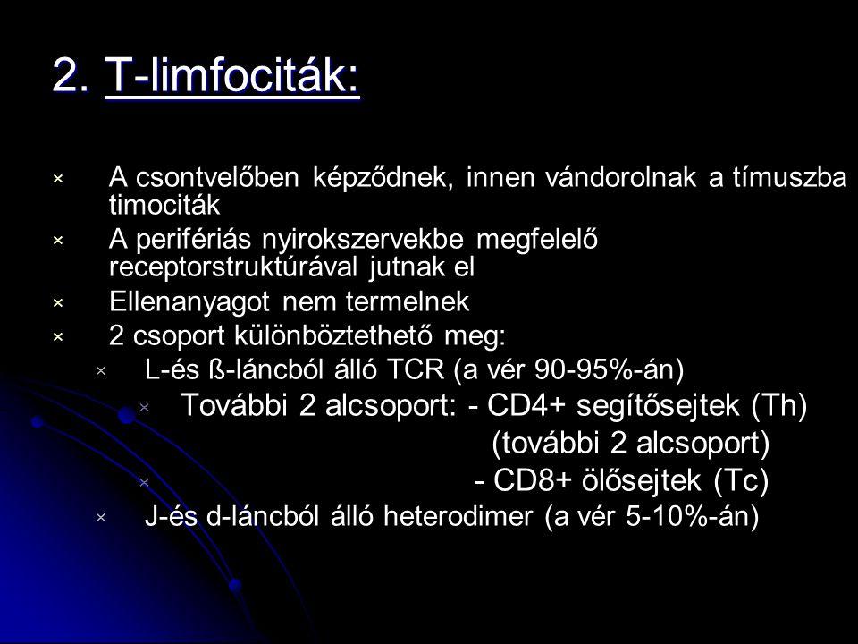 2. T-limfociták: × × A csontvelőben képződnek, innen vándorolnak a tímuszba timociták × × A perifériás nyirokszervekbe megfelelő receptorstruktúrával