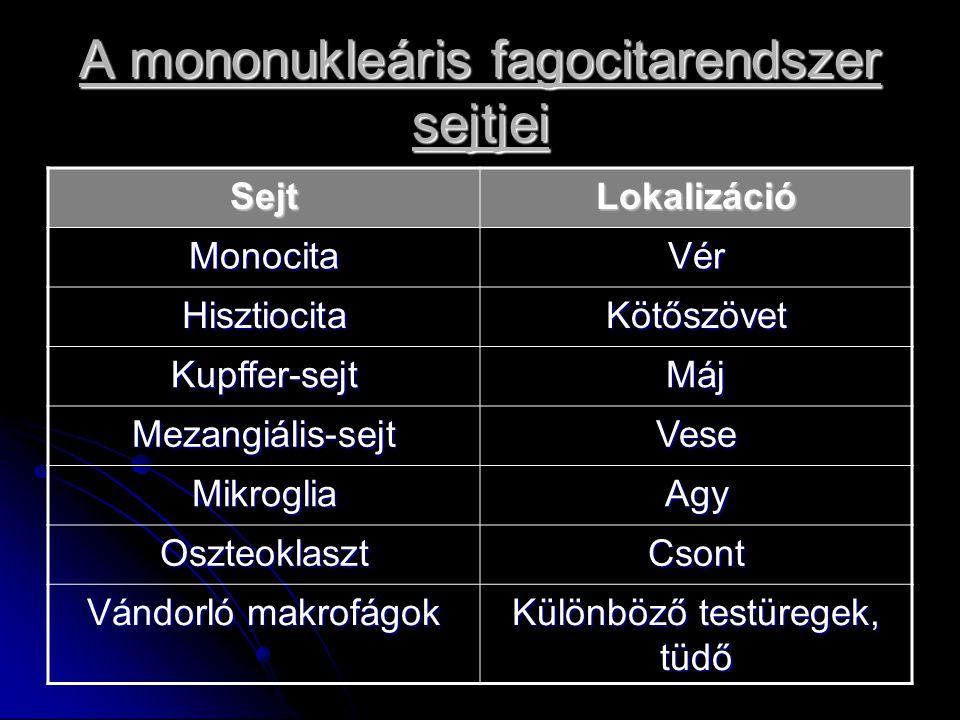 A mononukleáris fagocitarendszer sejtjei SejtLokalizáció MonocitaVér HisztiocitaKötőszövet Kupffer-sejtMáj Mezangiális-sejtVese MikrogliaAgy OszteoklasztCsont Vándorló makrofágok Különböző testüregek, tüdő