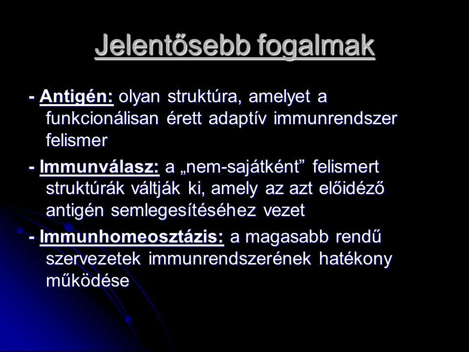 Az adaptív immunrendszer Ráépült a természetes immunrendszerre Ráépült a természetes immunrendszerre A szervezetbe bejutó patogének először a természetes immunrendszer elemeivel találkoznak A szervezetbe bejutó patogének először a természetes immunrendszer elemeivel találkoznak Az adaptív immunrendszer csak napokkal később aktiválódik Az adaptív immunrendszer csak napokkal később aktiválódik A természetes és adaptív immunrendszer szoros együttműködése biztosítja az immunhomeosztázist A természetes és adaptív immunrendszer szoros együttműködése biztosítja az immunhomeosztázist A folyamat eredménye a kórokozókkal szembeni védelem, a saját, megváltozott struktúrák elpusztítása, a genetikai kód állandóságának megőrzése A folyamat eredménye a kórokozókkal szembeni védelem, a saját, megváltozott struktúrák elpusztítása, a genetikai kód állandóságának megőrzése