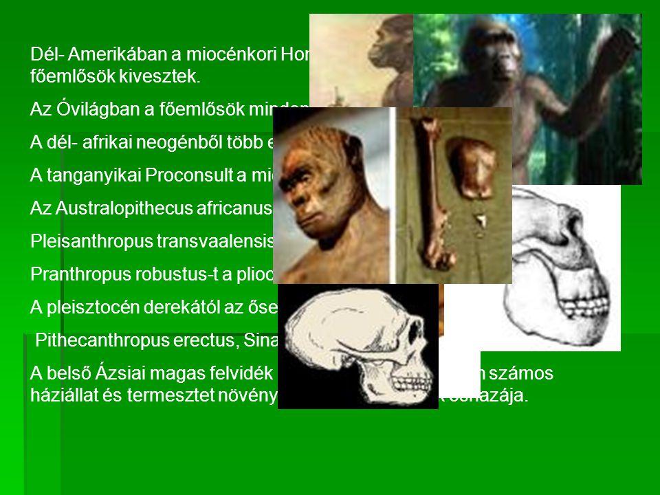 Dél- Amerikában a miocénkori Homunculus rövid feltűnése után a főemlősök kivesztek.