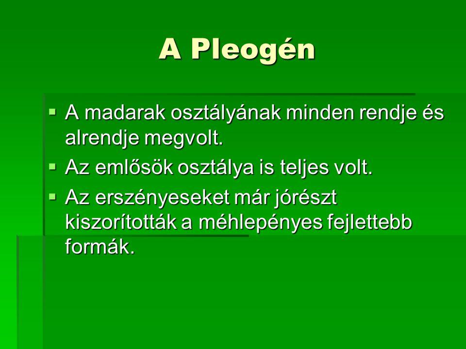 A Pleogén  A madarak osztályának minden rendje és alrendje megvolt.