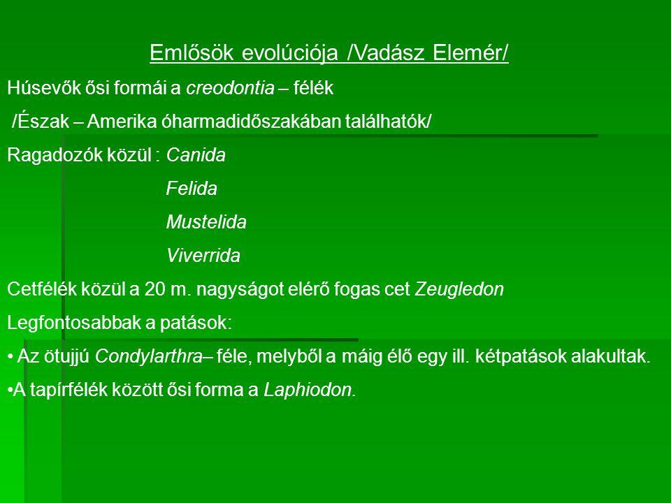 Emlősök evolúciója /Vadász Elemér/ Húsevők ősi formái a creodontia – félék /Észak – Amerika óharmadidőszakában találhatók/ Ragadozók közül : Canida Felida Mustelida Viverrida Cetfélék közül a 20 m.