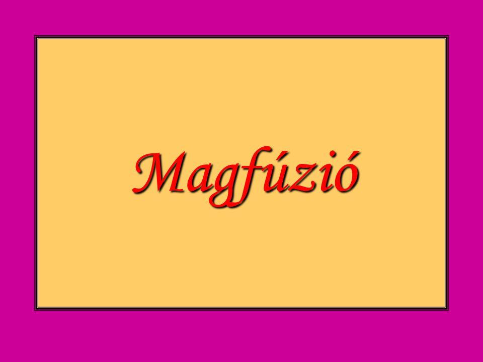 Magfúzió