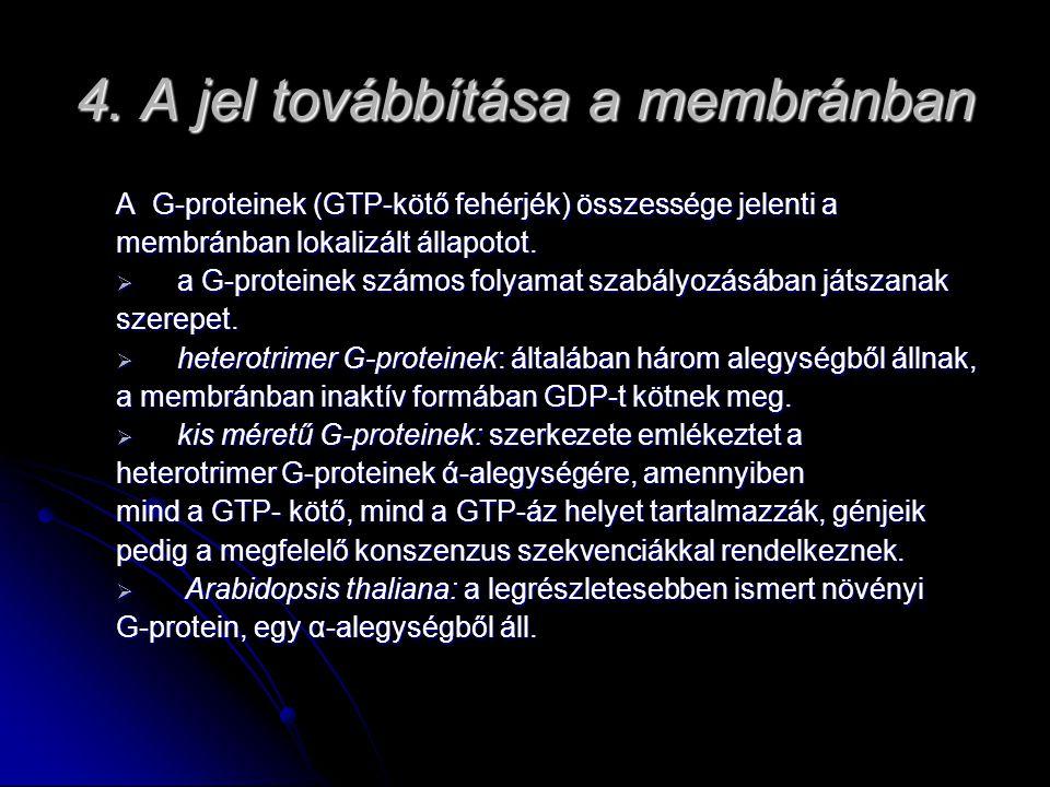 4. A jel továbbítása a membránban A G-proteinek (GTP-kötő fehérjék) összessége jelenti a membránban lokalizált állapotot.  a G-proteinek számos folya