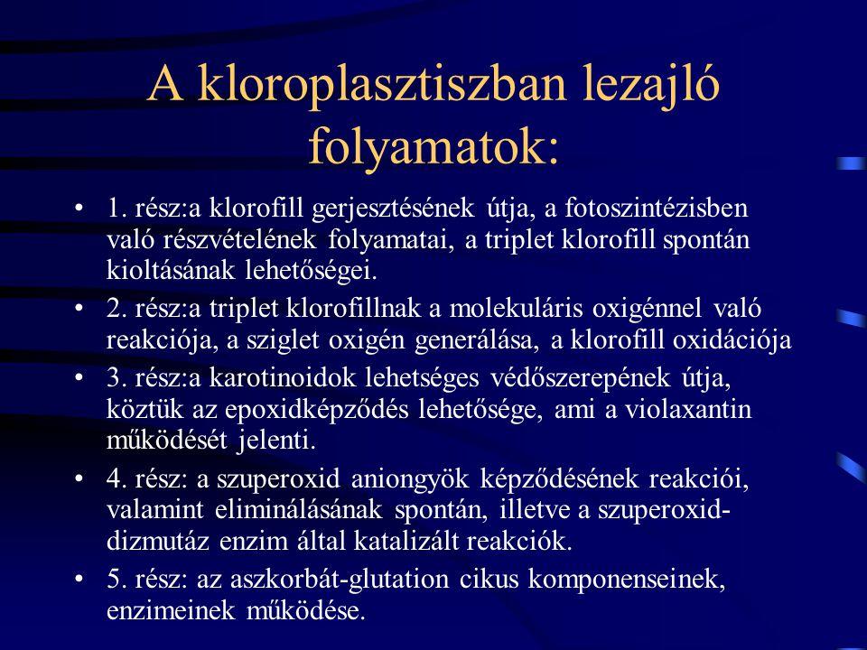 A kloroplasztiszban lezajló folyamatok: 1.