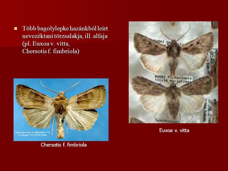 Több bagolylepke hazánkból leírt nevezéktani törzsalakja, ill. alfaja (pl. Euxoa v. vitta, Chersotis f. fimbriola) Több bagolylepke hazánkból leírt ne