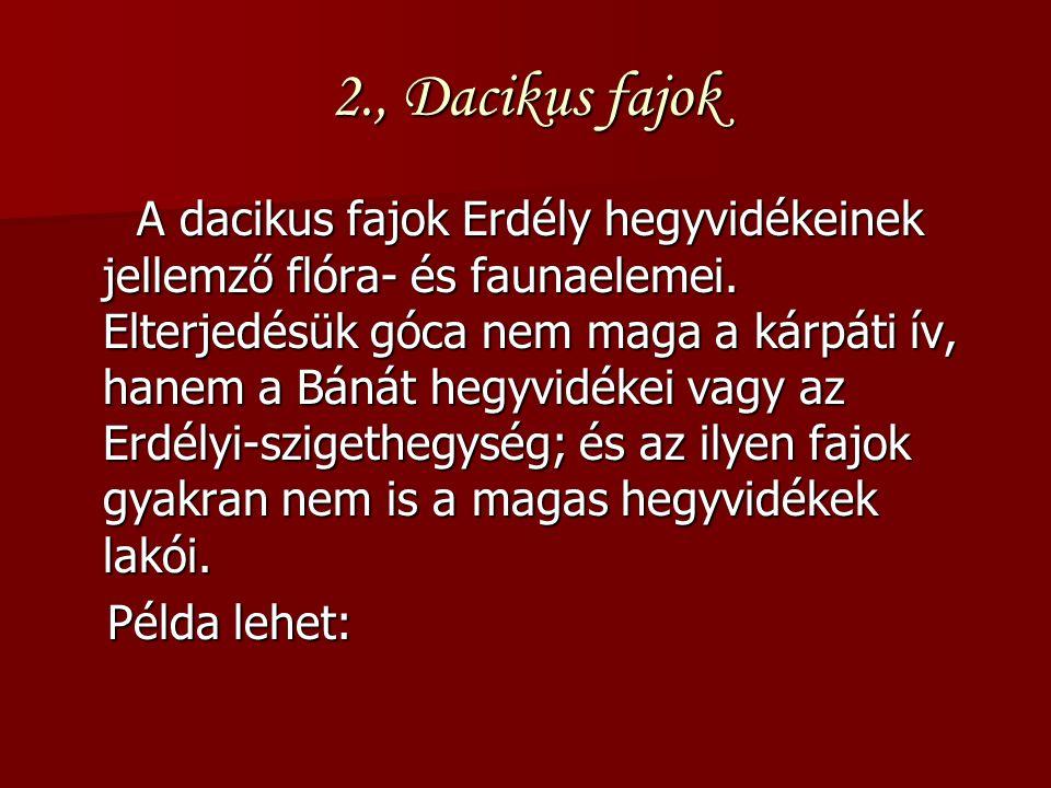 2., Dacikus fajok A dacikus fajok Erdély hegyvidékeinek jellemző flóra- és faunaelemei. Elterjedésük góca nem maga a kárpáti ív, hanem a Bánát hegyvid