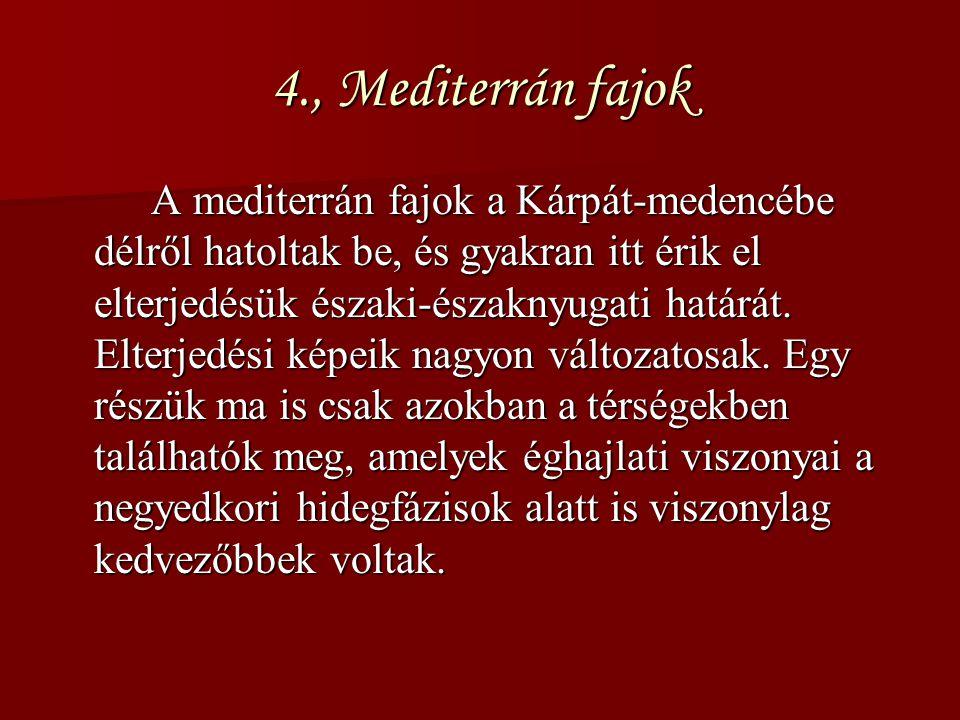 4., Mediterrán fajok A mediterrán fajok a Kárpát-medencébe délről hatoltak be, és gyakran itt érik el elterjedésük északi-északnyugati határát. Elterj