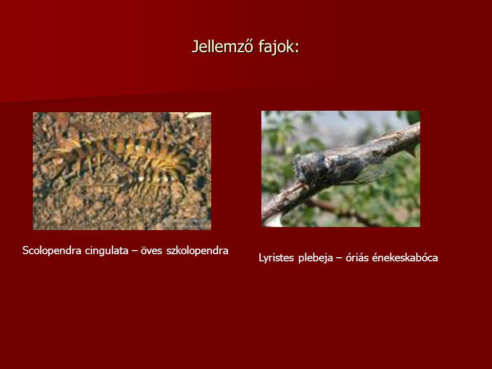 Jellemző fajok: Scolopendra cingulata – öves szkolopendra Lyristes plebeja – óriás énekeskabóca