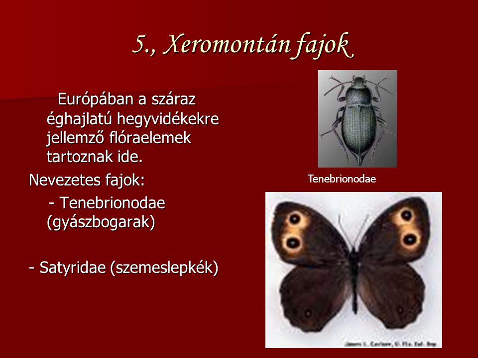5., Xeromontán fajok Európában a száraz éghajlatú hegyvidékekre jellemző flóraelemek tartoznak ide. Európában a száraz éghajlatú hegyvidékekre jellemz