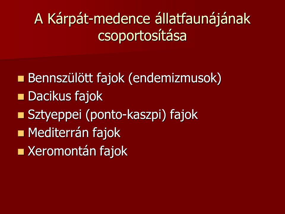 A Kárpát-medence állatfaunájának csoportosítása Bennszülött fajok (endemizmusok) Bennszülött fajok (endemizmusok) Dacikus fajok Dacikus fajok Sztyeppe