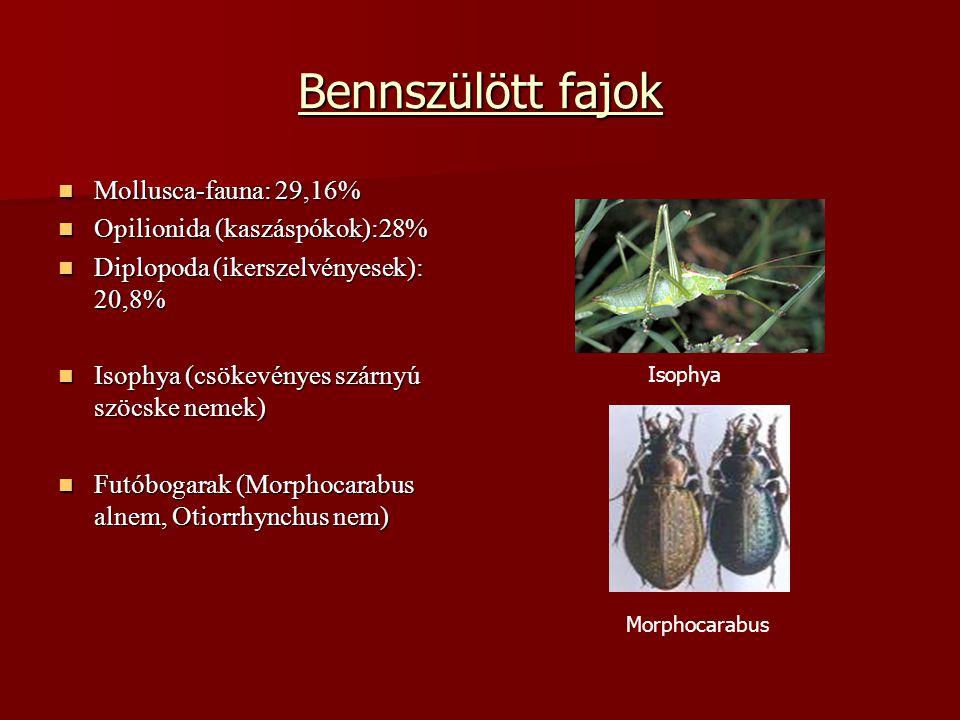 Bennszülött fajok Mollusca-fauna: 29,16% Mollusca-fauna: 29,16% Opilionida (kaszáspókok):28% Opilionida (kaszáspókok):28% Diplopoda (ikerszelvényesek)