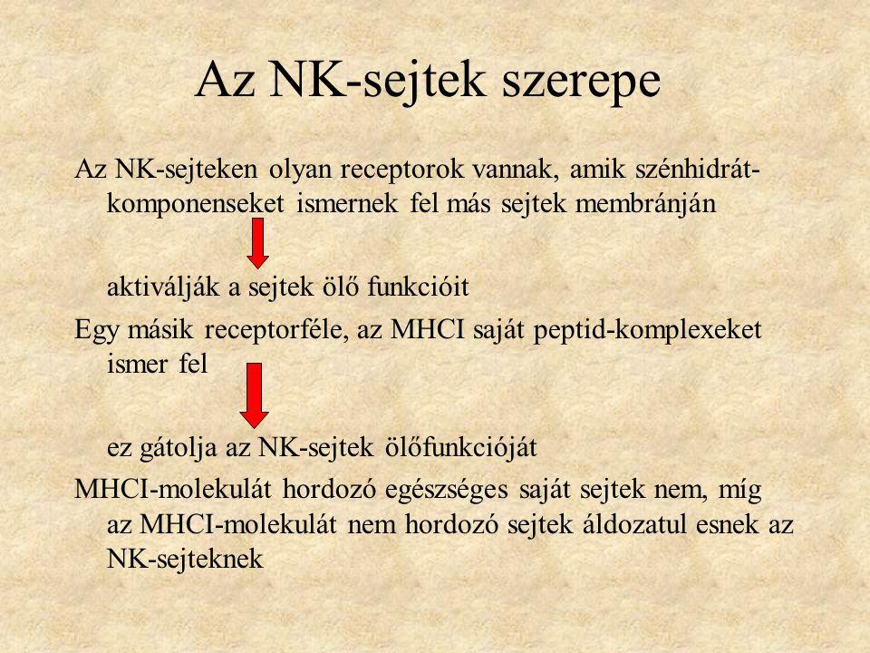 Az NK-sejtek szerepe Az NK-sejteken olyan receptorok vannak, amik szénhidrát- komponenseket ismernek fel más sejtek membránján aktiválják a sejtek ölő funkcióit Egy másik receptorféle, az MHCI saját peptid-komplexeket ismer fel ez gátolja az NK-sejtek ölőfunkcióját MHCI-molekulát hordozó egészséges saját sejtek nem, míg az MHCI-molekulát nem hordozó sejtek áldozatul esnek az NK-sejteknek
