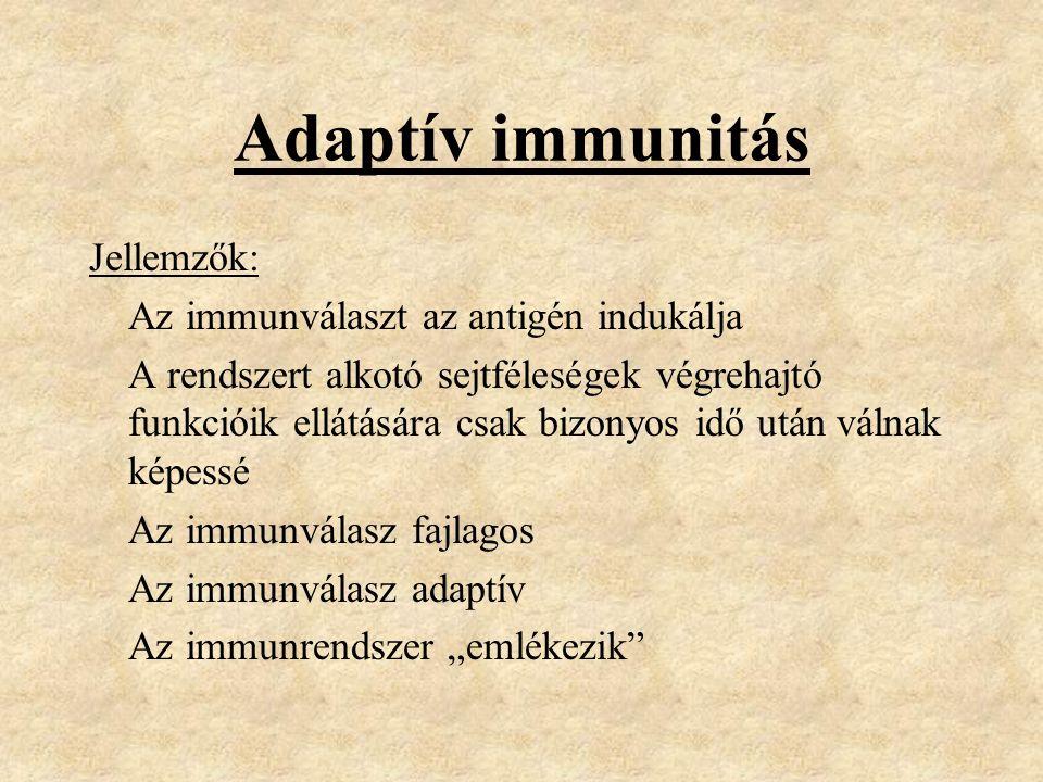 """Adaptív immunitás Jellemzők: Az immunválaszt az antigén indukálja A rendszert alkotó sejtféleségek végrehajtó funkcióik ellátására csak bizonyos idő után válnak képessé Az immunválasz fajlagos Az immunválasz adaptív Az immunrendszer """"emlékezik"""