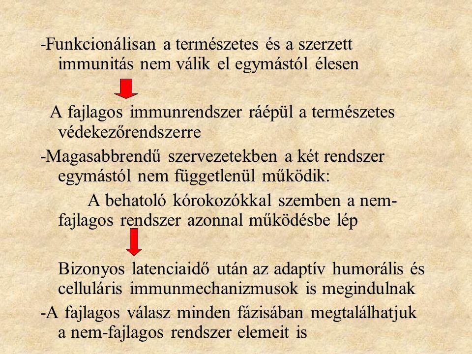 -Funkcionálisan a természetes és a szerzett immunitás nem válik el egymástól élesen A fajlagos immunrendszer ráépül a természetes védekezőrendszerre -Magasabbrendű szervezetekben a két rendszer egymástól nem függetlenül működik: A behatoló kórokozókkal szemben a nem- fajlagos rendszer azonnal működésbe lép Bizonyos latenciaidő után az adaptív humorális és celluláris immunmechanizmusok is megindulnak -A fajlagos válasz minden fázisában megtalálhatjuk a nem-fajlagos rendszer elemeit is