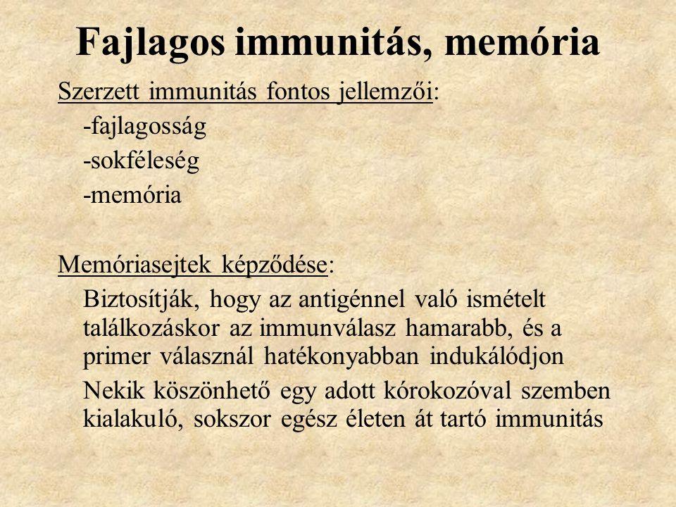 Fajlagos immunitás, memória Szerzett immunitás fontos jellemzői: -fajlagosság -sokféleség -memória Memóriasejtek képződése: Biztosítják, hogy az antigénnel való ismételt találkozáskor az immunválasz hamarabb, és a primer válasznál hatékonyabban indukálódjon Nekik köszönhető egy adott kórokozóval szemben kialakuló, sokszor egész életen át tartó immunitás
