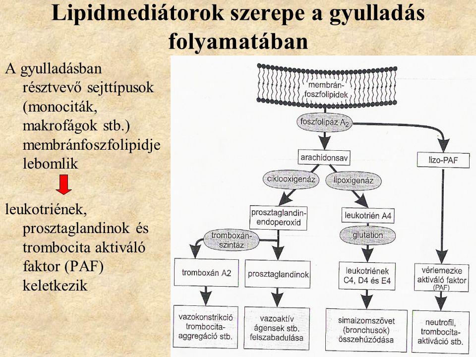 Lipidmediátorok szerepe a gyulladás folyamatában A gyulladásban résztvevő sejttípusok (monociták, makrofágok stb.) membránfoszfolipidje lebomlik leukotriének, prosztaglandinok és trombocita aktiváló faktor (PAF) keletkezik