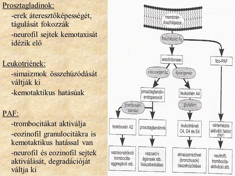 Prosztagladinok: -erek áteresztőképességét, tágulását fokozzák -neurofil sejtek kemotaxisát idézik elő Leukotriének: -simaizmok összehúzódását váltják ki -kemotaktikus hatásúak PAF: -trombocitákat aktiválja -eozinofil granulocitákra is kemotaktikus hatással van -neurofil és eozinofil sejtek aktiválását, degradációját váltja ki