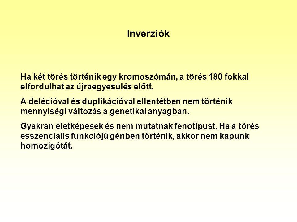 Inverziók Ha két törés történik egy kromoszómán, a törés 180 fokkal elfordulhat az újraegyesülés előtt. A delécióval és duplikációval ellentétben nem