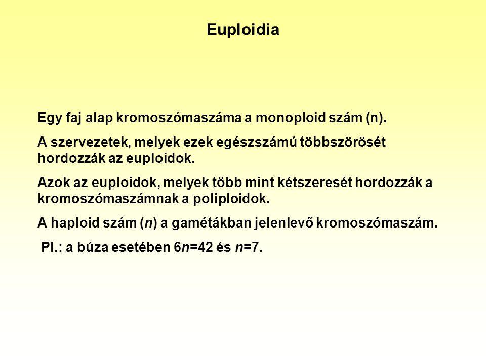Euploidia Egy faj alap kromoszómaszáma a monoploid szám (n). A szervezetek, melyek ezek egészszámú többszörösét hordozzák az euploidok. Azok az euploi