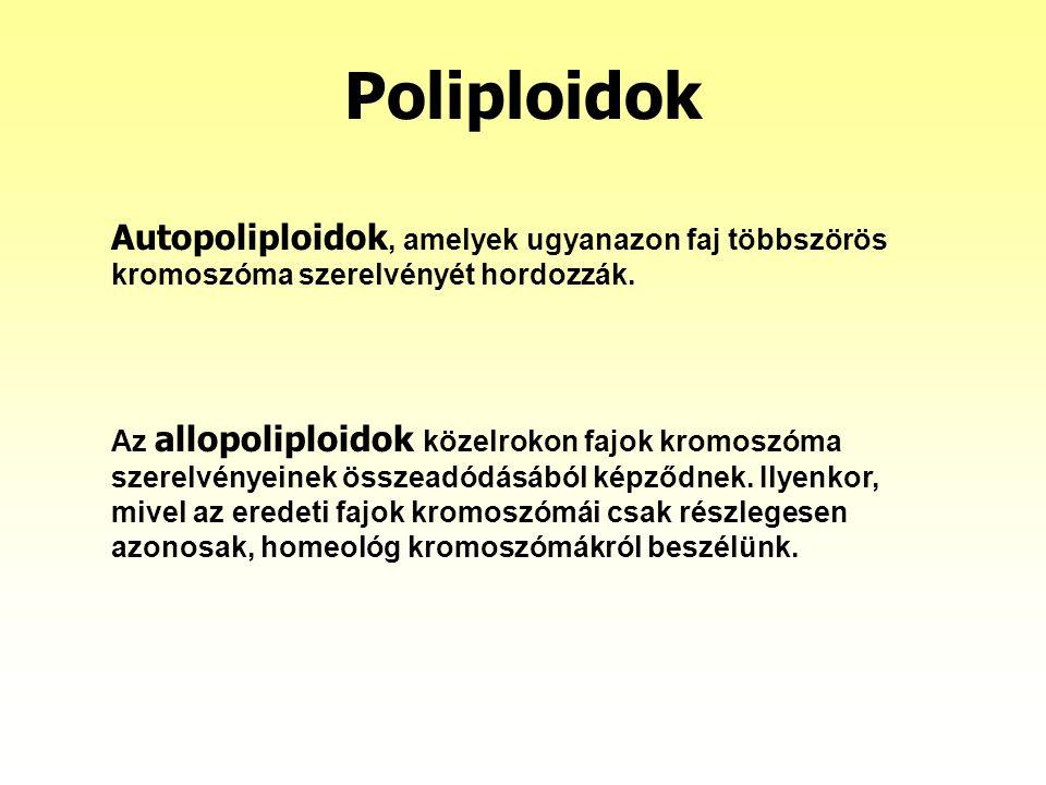 Poliploidok Autopoliploidok, amelyek ugyanazon faj többszörös kromoszóma szerelvényét hordozzák. Az allopoliploidok közelrokon fajok kromoszóma szerel