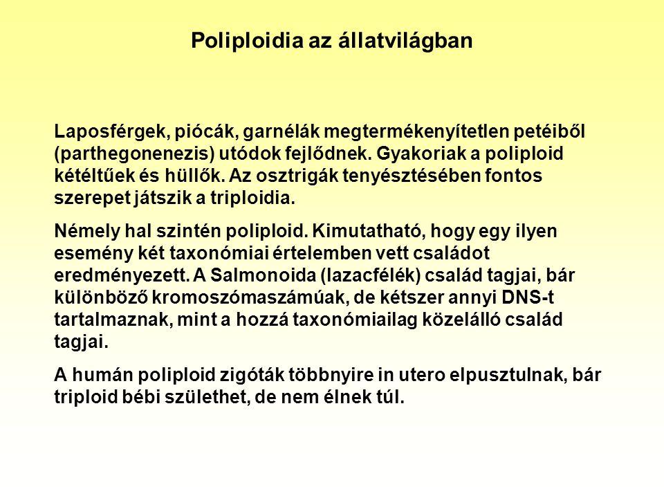Poliploidia az állatvilágban Laposférgek, piócák, garnélák megtermékenyítetlen petéiből (parthegonenezis) utódok fejlődnek. Gyakoriak a poliploid kété