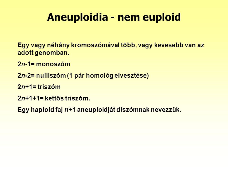 Aneuploidia - nem euploid Egy vagy néhány kromoszómával több, vagy kevesebb van az adott genomban. 2n-1= monoszóm 2n-2= nulliszóm (1 pár homológ elves