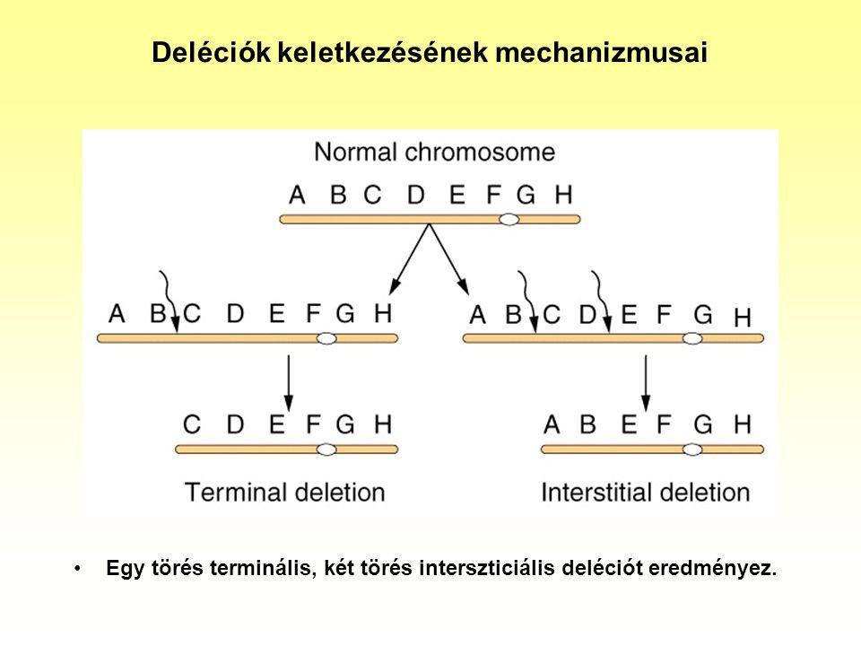 Deléciók keletkezésének mechanizmusai Egy törés terminális, két törés interszticiális deléciót eredményez.