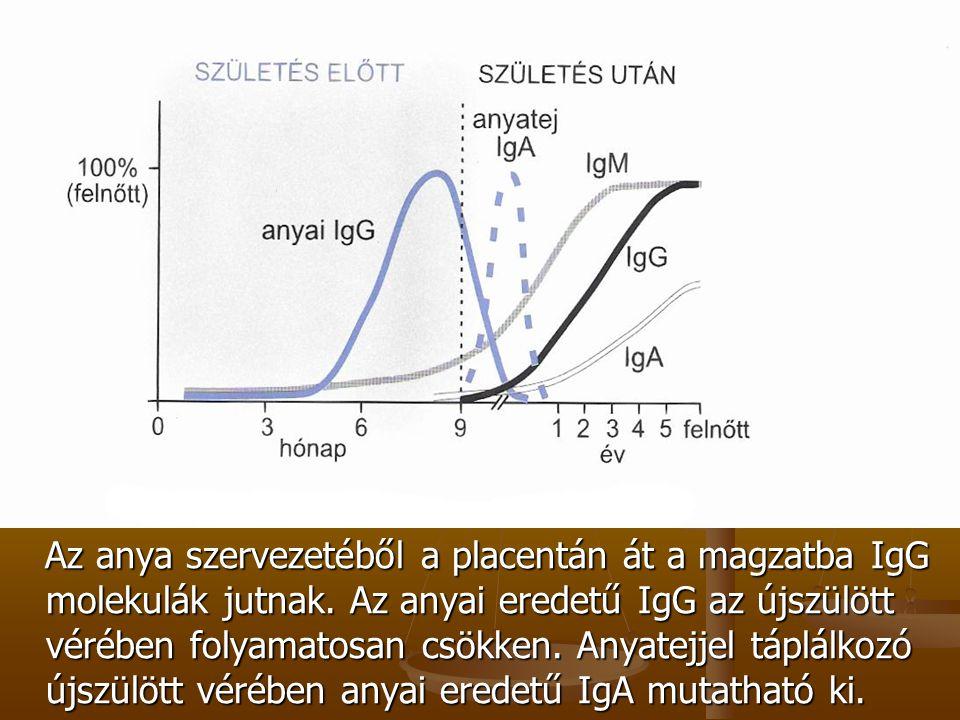 Az anya szervezetéből a placentán át a magzatba IgG molekulák jutnak. Az anyai eredetű IgG az újszülött vérében folyamatosan csökken. Anyatejjel táplá