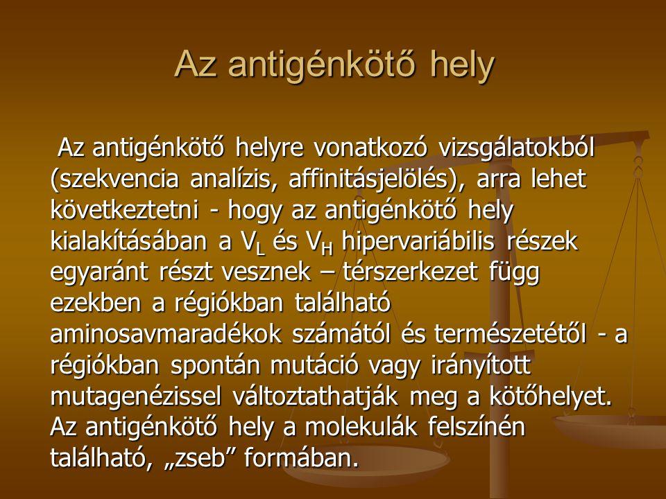 Az antigénkötő hely Az antigénkötő helyre vonatkozó vizsgálatokból (szekvencia analízis, affinitásjelölés), arra lehet következtetni - hogy az antigén