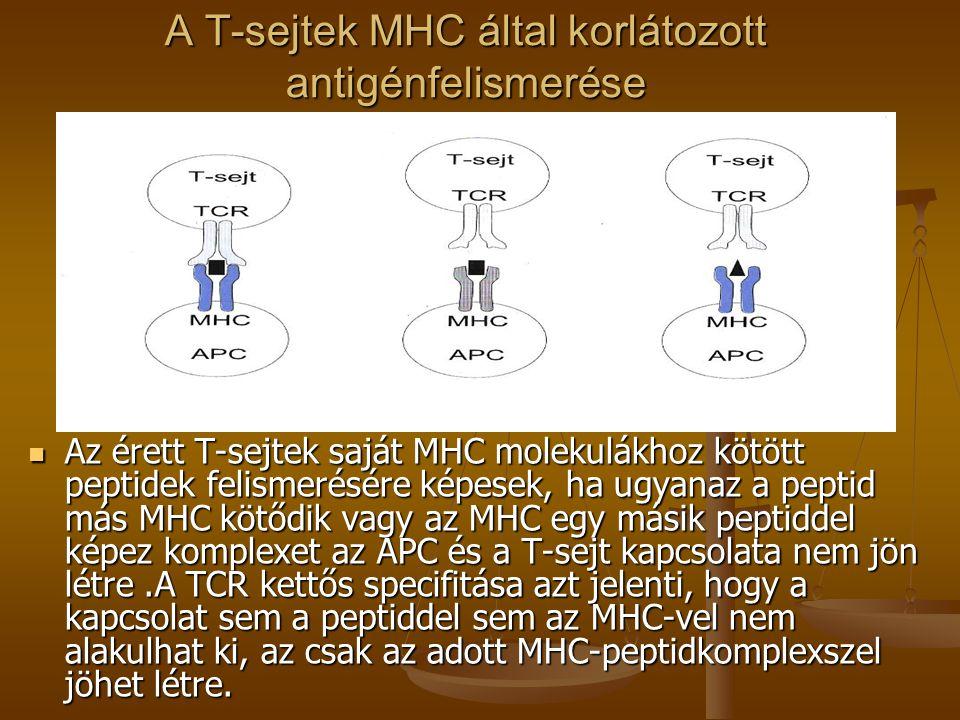 A T-sejtek MHC által korlátozott antigénfelismerése Az érett T-sejtek saját MHC molekulákhoz kötött peptidek felismerésére képesek, ha ugyanaz a pepti