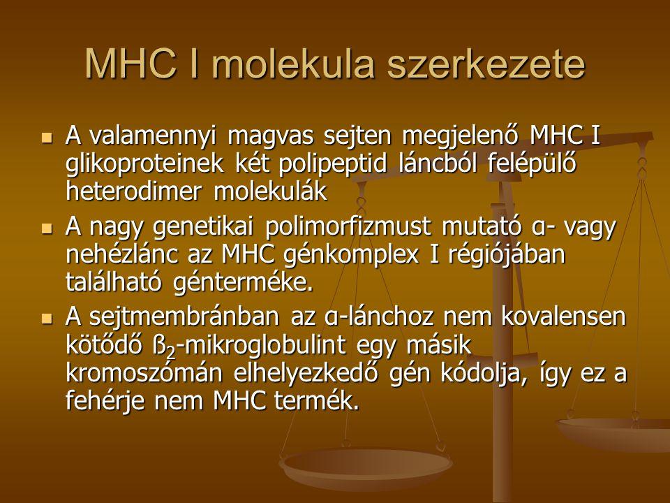 MHC I molekula szerkezete A valamennyi magvas sejten megjelenő MHC I glikoproteinek két polipeptid láncból felépülő heterodimer molekulák A valamennyi
