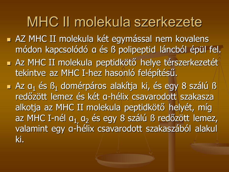 MHC II molekula szerkezete AZ MHC II molekula két egymással nem kovalens módon kapcsolódó α és ß polipeptid láncból épül fel. AZ MHC II molekula két e