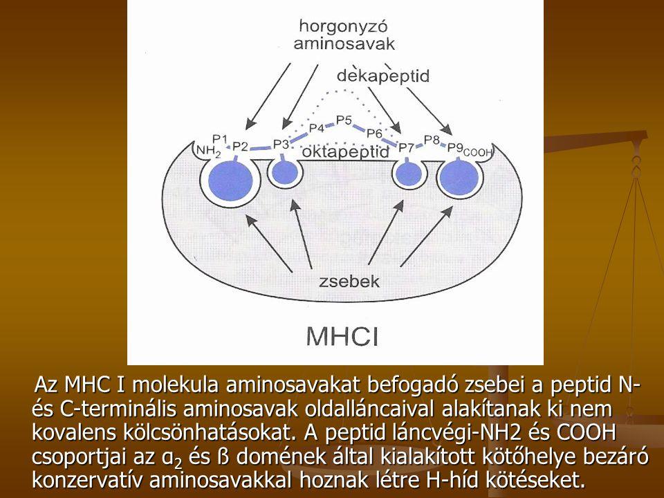 Ábra 110 6 11. Mhc 1 Az MHC I molekula aminosavakat befogadó zsebei a peptid N- és C-terminális aminosavak oldalláncaival alakítanak ki nem kovalens k