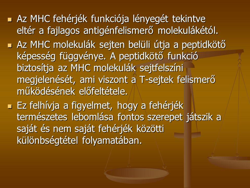 Az MHC fehérjék funkciója lényegét tekintve eltér a fajlagos antigénfelismerő molekulákétól. Az MHC fehérjék funkciója lényegét tekintve eltér a fajla