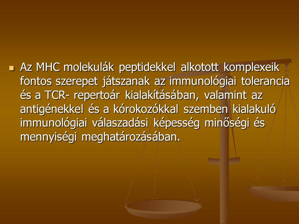 Az MHC molekulák peptidekkel alkotott komplexeik fontos szerepet játszanak az immunológiai tolerancia és a TCR- repertoár kialakításában, valamint az