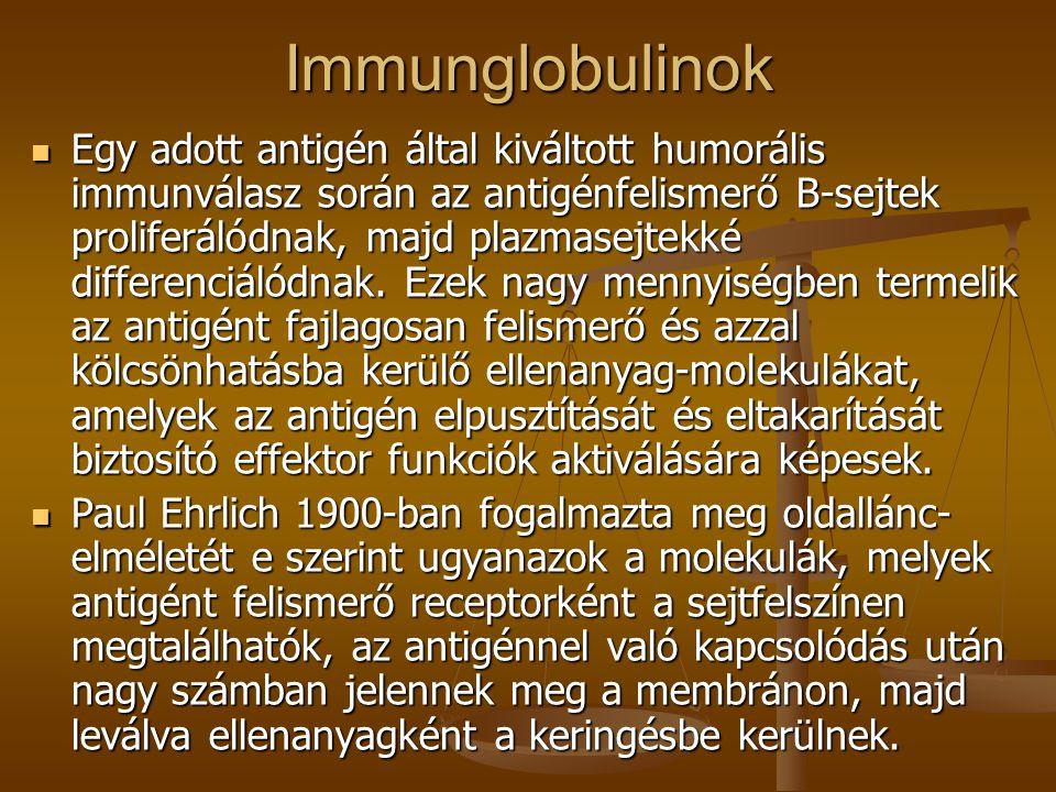Immunglobulinok Egy adott antigén által kiváltott humorális immunválasz során az antigénfelismerő B-sejtek proliferálódnak, majd plazmasejtekké differ