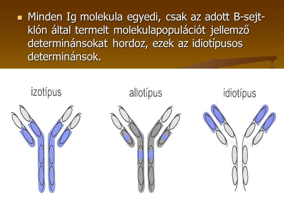 Minden Ig molekula egyedi, csak az adott B-sejt- klón által termelt molekulapopulációt jellemző determinánsokat hordoz, ezek az idiotípusos determinán