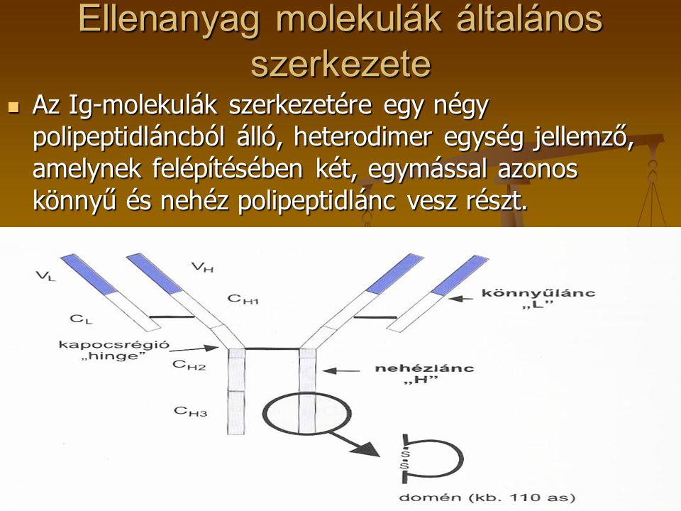 Ellenanyag molekulák általános szerkezete Az Ig-molekulák szerkezetére egy négy polipeptidláncból álló, heterodimer egység jellemző, amelynek felépíté