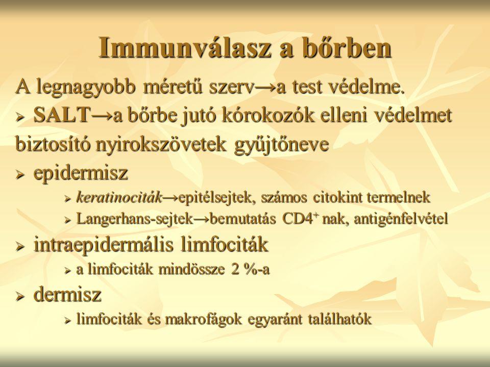 Immunválasz a bőrben A legnagyobb méretű szerv→a test védelme.  SALT→a bőrbe jutó kórokozók elleni védelmet biztosító nyirokszövetek gyűjtőneve  epi
