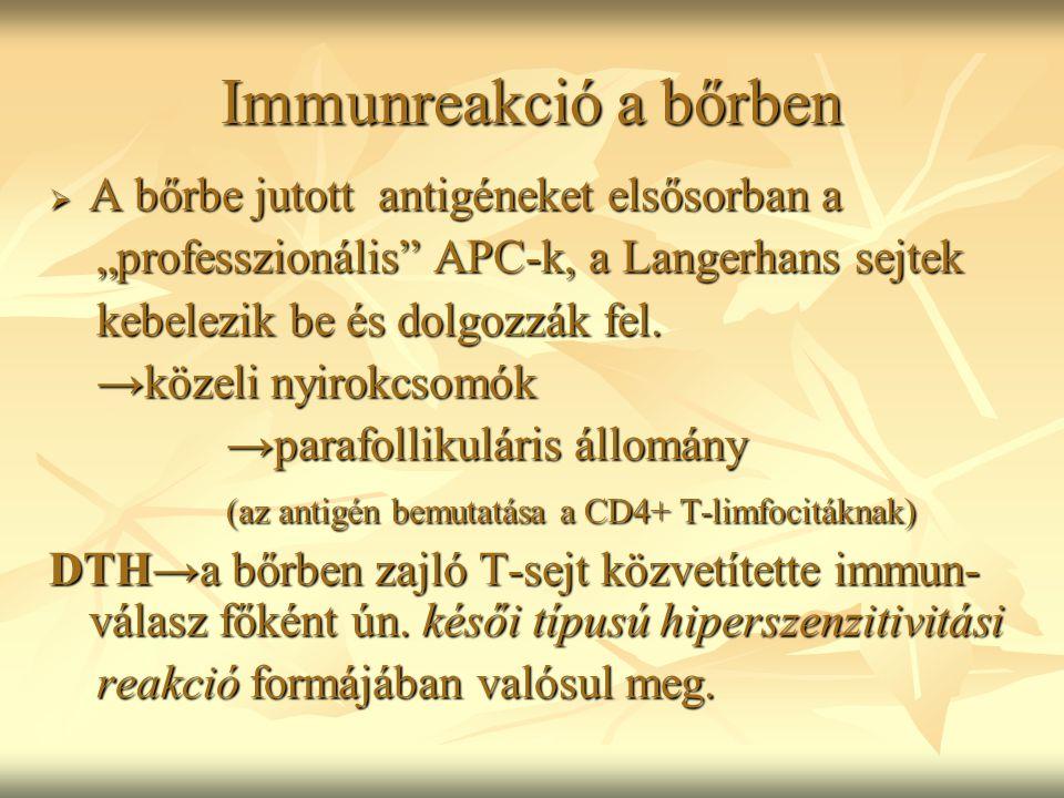 """Immunreakció a bőrben  A bőrbe jutott antigéneket elsősorban a """"professzionális"""" APC-k, a Langerhans sejtek """"professzionális"""" APC-k, a Langerhans sej"""