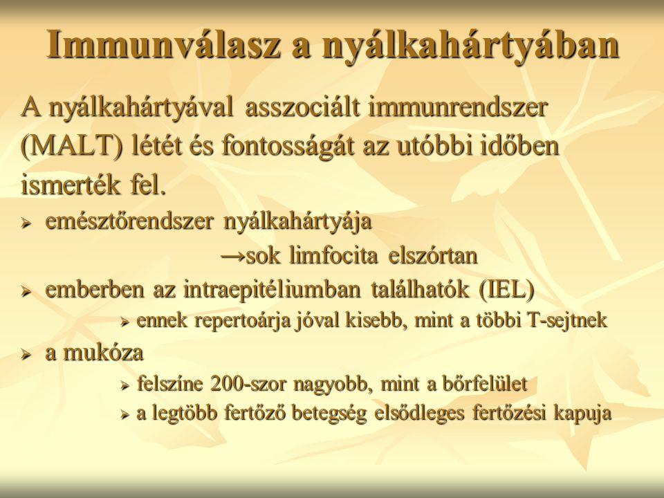 Immunválasz a nyálkahártyában A nyálkahártyával asszociált immunrendszer (MALT) létét és fontosságát az utóbbi időben ismerték fel.  emésztőrendszer
