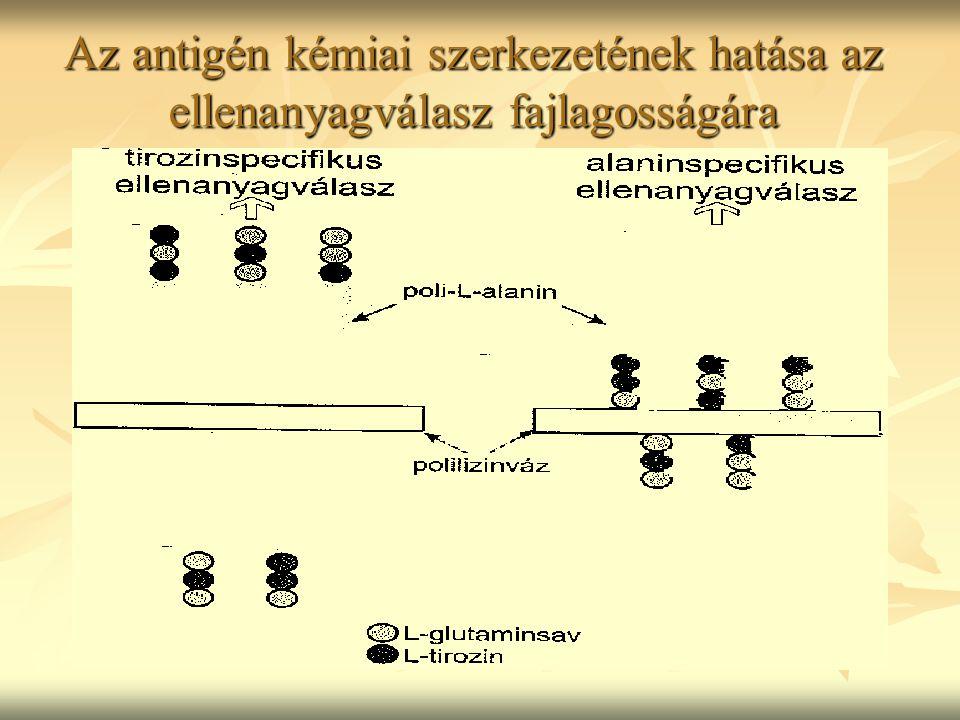Az antigén kémiai szerkezetének hatása az ellenanyagválasz fajlagosságára