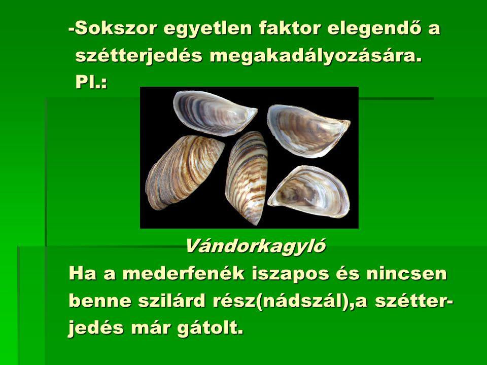 -Sokszor egyetlen faktor elegendő a -Sokszor egyetlen faktor elegendő a szétterjedés megakadályozására.