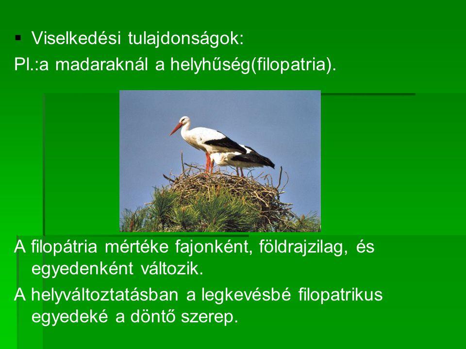   Viselkedési tulajdonságok: Pl.:a madaraknál a helyhűség(filopatria).