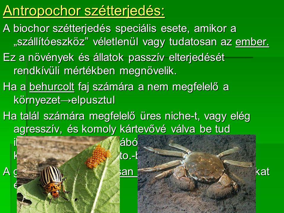 """Antropochor szétterjedés: A biochor szétterjedés speciális esete, amikor a """"szállítóeszköz véletlenül vagy tudatosan az ember."""